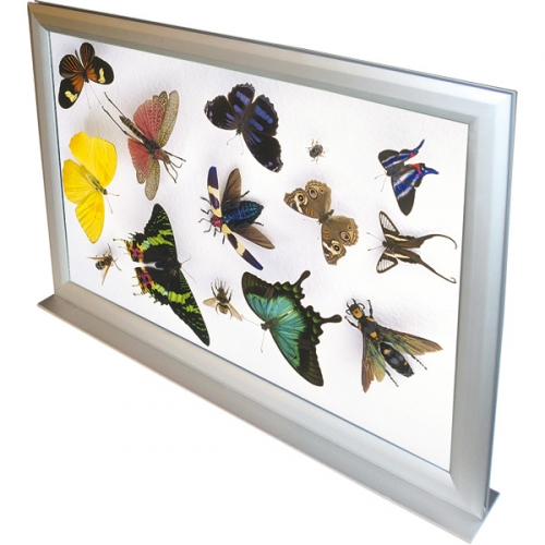 Double Sided Counter Frame